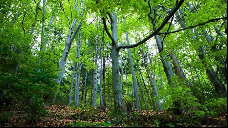 Comisia pentru mediu a avizat Codul Silvic, criticat că permite defrişările ilegale
