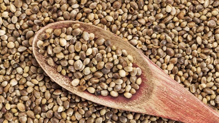 FRESH-REFRESH. Beneficiiile semințelor de cânepă