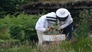 Femeie ucisă de albine.