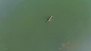 DESCOPERIRE incredibilă într-un lac din Grecia