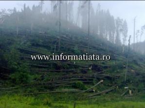 Pădure răvăşită de o tornadă în Suceava