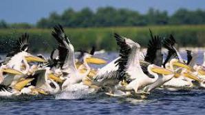 """Fauna din """"Delta Dunării"""", în pericol crescut de mortalitate"""