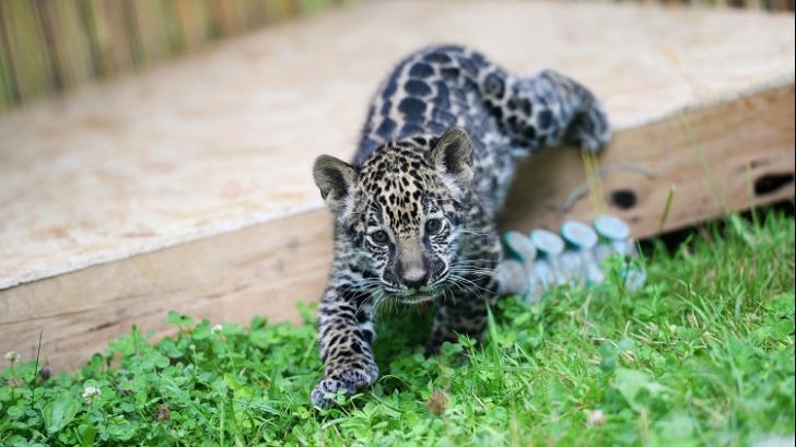 Apariție uluitoare la o grădină zoo din România