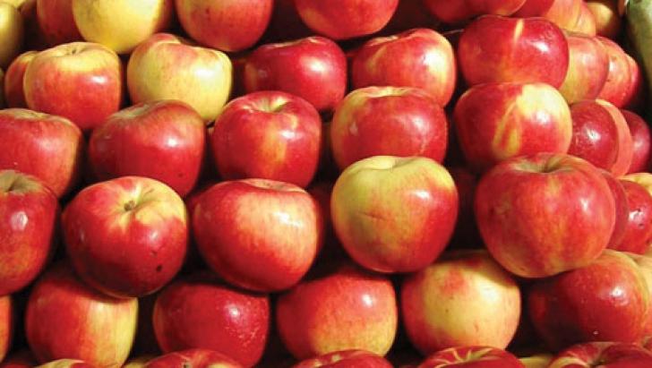 Comisia UE vrea dublarea contingentelor pentru mere, prune şi struguri de masa din Republica Moldova