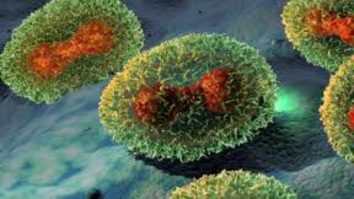 Fiole cu virusul variolei, descoperite într-un laborator din SUA