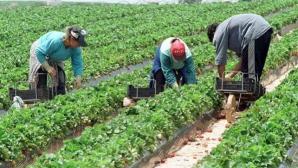 Agricultură cu bani europeni