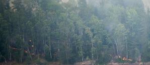 Suedia, stare de urgenţă, în urma celui mai mare incendiu de vegetaţie din ultimii 40 de ani