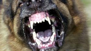Încă două morţi suspecte în care sunt implicaţi câinii.