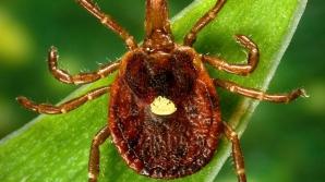 Dacă ai fost mușcat de această insectă, s-ar putea să nu mai poți mânca niciodată carne