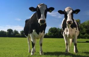 Rusia a limitat importurile de animale din Italia, Bulgaria şi Grecia