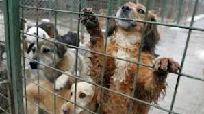 Ororile din adăposturile de câini