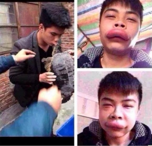 Tânărul care a vrut să sărute o broască ţestoasă