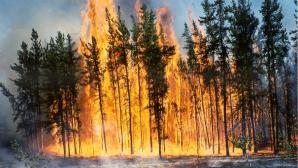Suedia se confruntă cu cele mai grave incendii de pădure din istoria modernă.