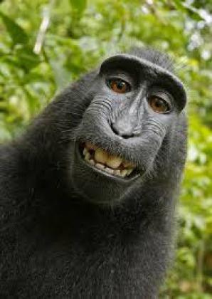Selfie-ul făcut de maimuţă