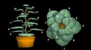 Matematica, instrument util în adaptarea plantelor la schimbările climatice