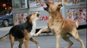 Dezvăluiri strainii despre un bărbat omorât de câini în Chitila