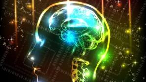 Creierul uman: 10 mituri uluitoare. Ce este adevărat şi ce este fals