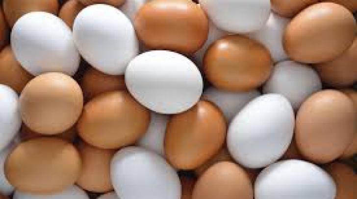 De ce există ouă de culori diferite?