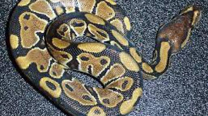 Fetiţă muşcată de şarpe