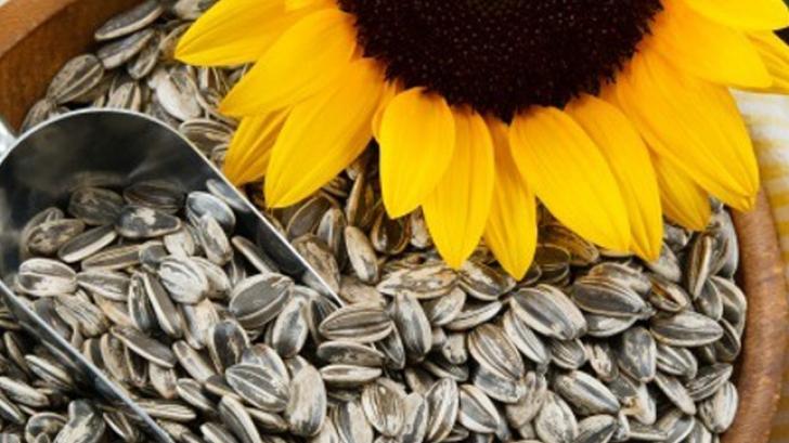 Ce nu ştiai despre floarea-soarelui