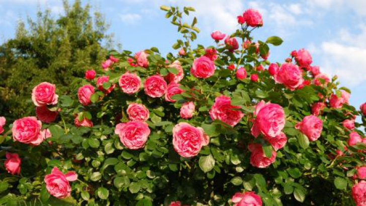 Beneficiile plantelor