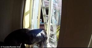 Cum evadează un câine dintr-o cameră închisă
