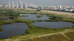 Lacul Văcăreşti ar putea fi declarat arie protejată. Ce spune Oprescu despre Delta din Bucureşti
