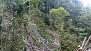 OAMENII REALITĂŢII: Omul care salvează pădurile, invitatul lui Dorin Chioţea, sâmbătă, ora 18.30