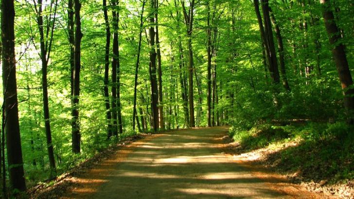 Mai mulți politicieni din UDMR forțează preluarea unei păduri uriașe de la stat printr-un obscur ONG