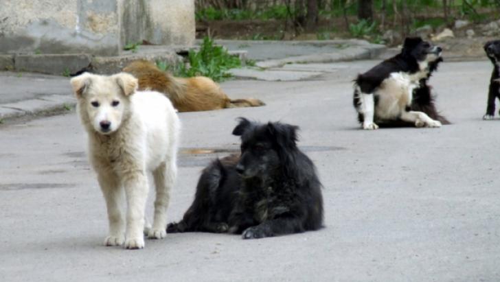 Câini maidanezi