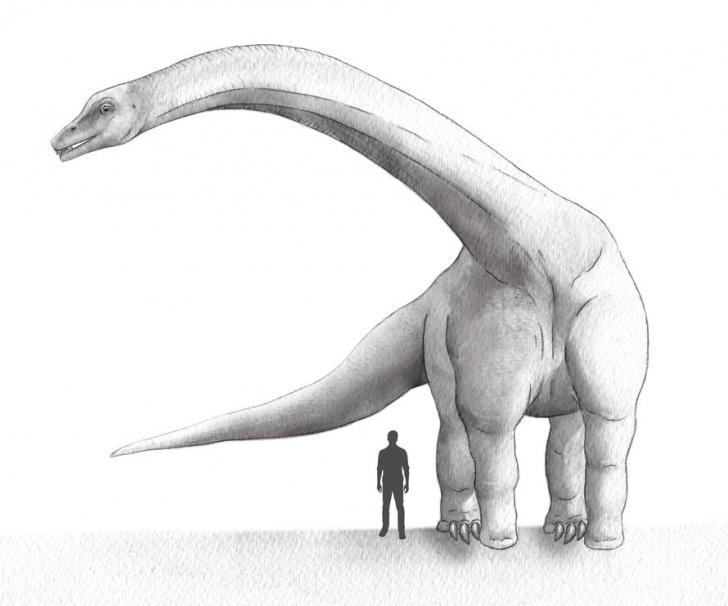 A fost găsit cel mai mare dinozaur din istorie. Era cât 12 elefanţi la un loc