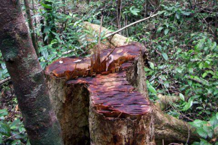 Pădurile din Madagascar