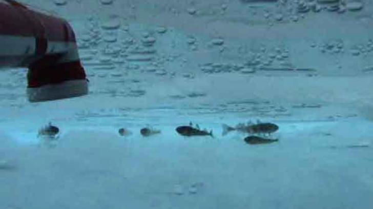 Te-ai întrebat vreodata cum rezistă peștii în oceanul înghețat? Vezi EXPLICAȚIA!