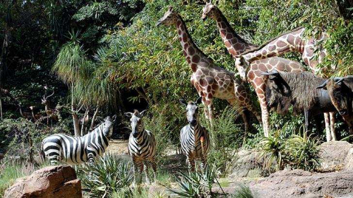 Peste 50% din animalele sălbatice AU DISPĂRUT de pe Terra în ultimii 40 de ani - raport WWF