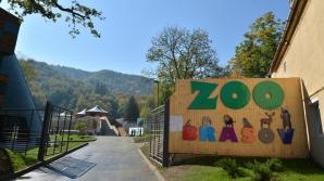 Grădina zoologică din Braşov, REDESCHISĂ publicului după doi ani