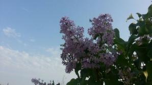 FENOMEN STRANIU în Alexandria. Miracol al naturii? / Foto: adevarul.ro