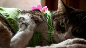 Prima revistă fashion dedicată pisicilor şi iubitorilor de feline, lansată la Londra