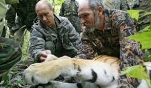 Tigrul lui Putin