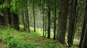 Mafia pădurilor, speriată în ceasul al 13-lea
