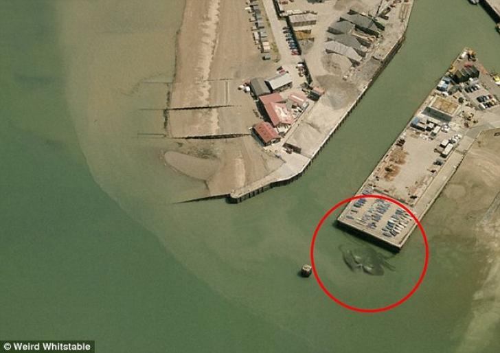 Creatură misterioasă, de 15 metri, surprinsă într-o fotografie aeriană. Ce este?