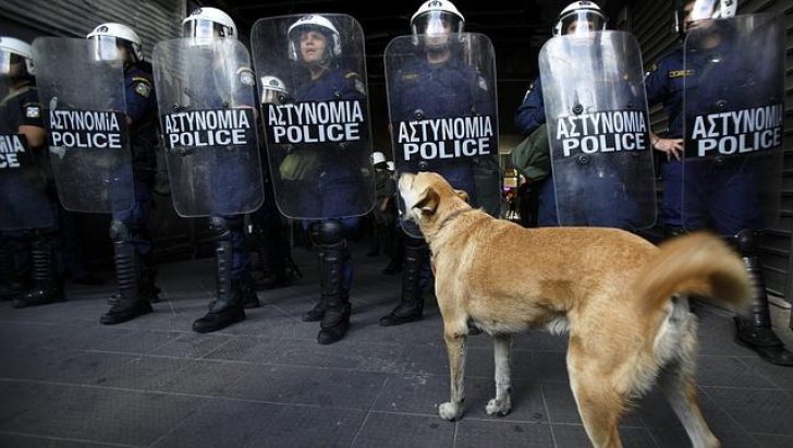 Loukanikos, câinele protestatar