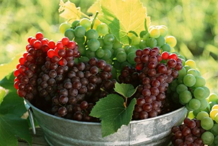 Fructele toamnei, STRUGURII. Cum să-i cumperi, cum să-i păstrezi