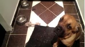 Cel mai vinovat câine din lume, REACŢIA care a devenit virală pe internet