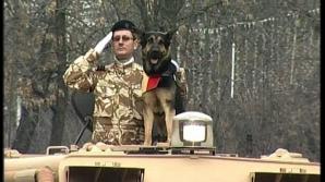 Câinele Max schimbă legea
