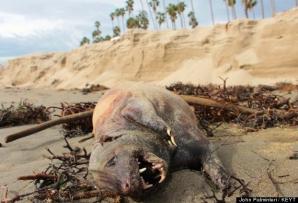 Creatura adusă de furtună pe malul mării