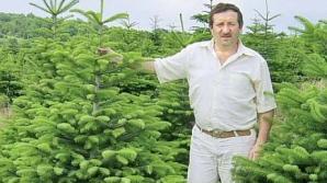 Un profesor din Transilvania deține cea mai mare plantație de brazi din Europa Centrală și de Est