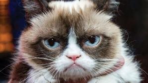 GRUMPY CAT, pisica faimoasă pe internet