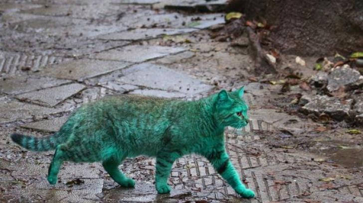Misterul pisicii verzi! O nouă specie sau victimă?