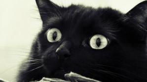 Ce nu ştiai despre pisica neagră