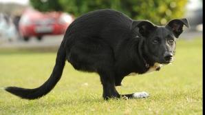 Un câine-cangur face senzație în Marea Britanie